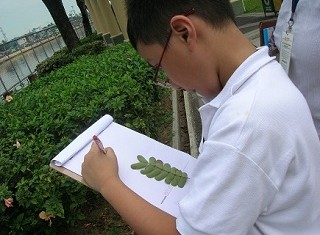 Boy studying leaves